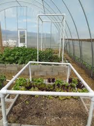 build a tomato trellis the living farm