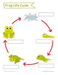 free 2nd grade worksheets u0026 printables primarylearning org