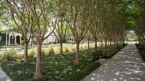 the most popular trees for commercial buildings in each region are