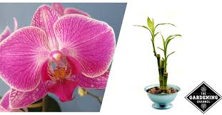 good houseplants for low light list of houseplants for low light gardening channel