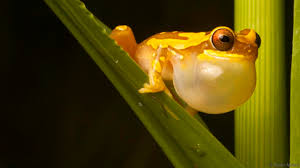 bbc earth can frogs return from the dead