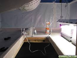 bomb shelter ho t5 and led perpetual harvest shelf grow