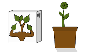 Plants That Dont Need Light 100 Plants That Dont Need Light Amazon Com Spigo Indoor Led