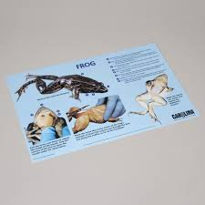 carolina frog dissection mat carolina com
