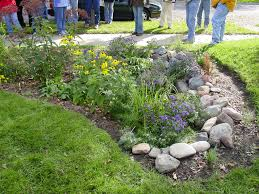 nebraska native plants what u0027s up with rain gardens