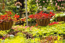 garden city nursery bentonville ar plants u0026 trees for sale