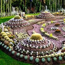 Cactus Garden Ideas Cactus Garden Cactus Gardens Sweden Swedish Park Carl Johans