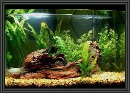 aquarium decoration ideas freshwater 20 gallon aquarium decoration ideas aquariums tanks fish