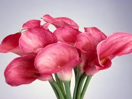 imagenes para enamorar con flores flores para enamorar imágenes taringa