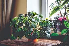 Fragrant Indoor House Plants 6 Low Maintenance House Plants