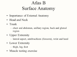 Foot Surface Anatomy Atlas B Surface Anatomy Ppt Video Online Download