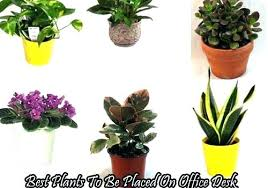 Best Plant For Office Desk Small Office Desk Plants Mesmerizing Plant Best Medium Size