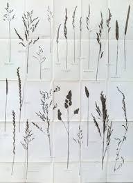 small handmade original botanical mono print stef mitchell wild