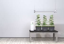 chambre de culture hydroponique chambre de culture complete cannabis culture indoor de cannabis