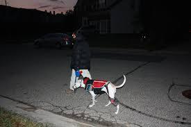can dogs eat thanksgiving turkey november 2014 allmycaninecompanions