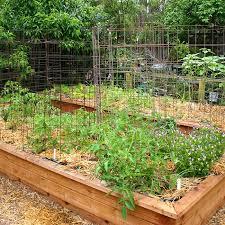 awesome vegetable gardening in georgia raised vegetable garden