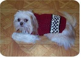 free crochet pug sweater pattern squareone for
