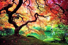 47 beautiful tree hd wallpapers for free