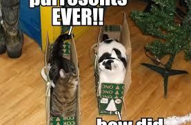Christmas Cat Memes - funny christmas cat meme cute memes about litle pups