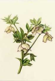 214 best current reference images on pinterest botanical