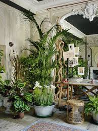 home interior plants the 25 best house plants ideas on plants indoor