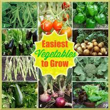 vegetables to grow in garden best idea garden