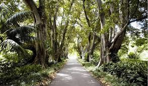 The Australian Botanic Garden Outreach Education Botanic Gardens Of South Australia