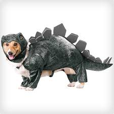 Small Dog Halloween Costumes 63 Cute Dog Halloween Costumes Images Pet