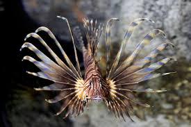 fort fisher nc aquariums kure beach nc 28449