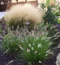 ornamental grasses for landscaping gardening in borders