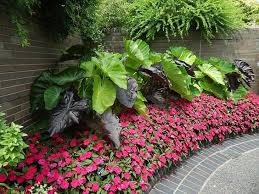 corner garden with border and elephant ear plants garden