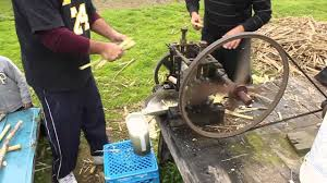 extracting sugar cane juice in backyard youtube