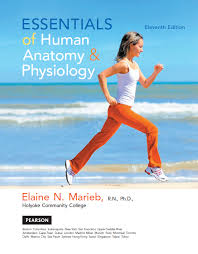 Human Anatomy Textbook Pdf Essentials Of Human Anatomy And Physiology Textbook Pdf Essentials