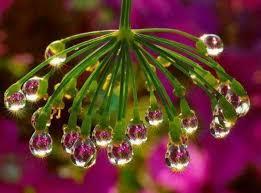 imagenes flores bellisimas imágenes de flores bellas que alegran el alma plantas