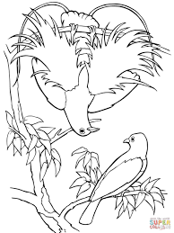 blue bird of paradise coloring page free printable coloring pages