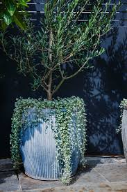style tip tree potting u2014 adam robinson design