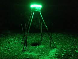 hog hunting lights for feeder custom led light kits anytimeoutdoors guide service fishing and