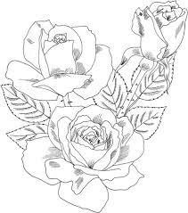 imagenes para colorear rosas rosa de te double delight hybrid dibujo para colorear categorías