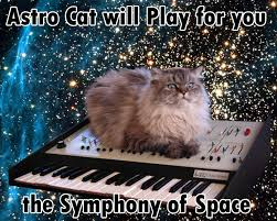 Random Cat Meme - cat on a keyboard in space know your meme