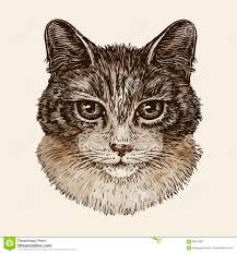 sketch of a kitten stock vector image of isolated domestic