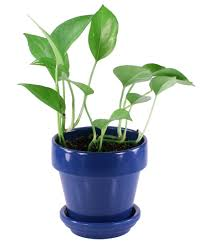small potted plants small house plant stock photo by darren hester french window indoor