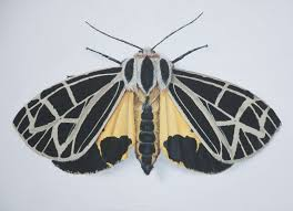 they aren u0027t butterflies u0027 ugly stepsister here u0027s why moths are