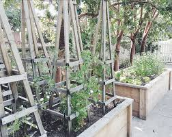 around the house raised vegetable beds tomato trellis my