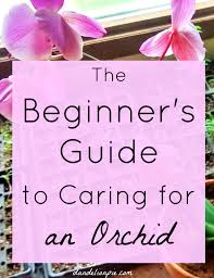 a beginner u0027s guide to caring for an orchid orchids orchid and