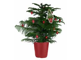 14 faux christmas trees to green your holidays norfolk island pine