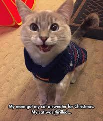 Funny Christmas Cat Memes - dump a day funny animals of the day 16 pics funny animal animal