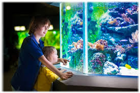 9 benefits of ornamental fish for humans healthy t1ps