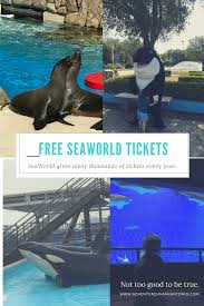How Much Are Season Passes For Six Flags Seaworld Season Pass Money Saving Tips Save 100 For A Family Of 4