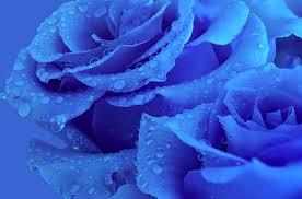 Blue Flower Backgrounds - 221199 color wallpapers sky blue sun clouds wallpaper clouds