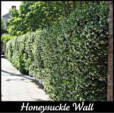 grow honeysuckle cleaning solutions interior walls and interiors